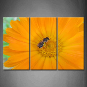 Bee Is Gather Honey On Yellow Flower Wall Art Painting Pictures Print On Canvas Flower The Picture For Home Modern Decoration