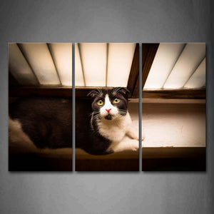 Black And White Cat Bend Over Sill Wall Art Painting The Picture Print On Canvas Animal Pictures For Home Decor Decoration Gift