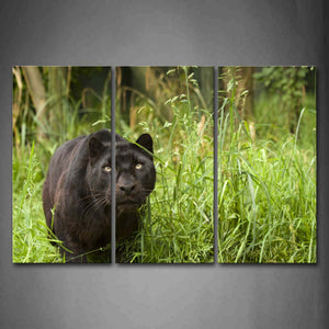 Black Panther Stop On Grass Wall Art Painting Pictures Print On Canvas Animal The Picture For Home Modern Decoration