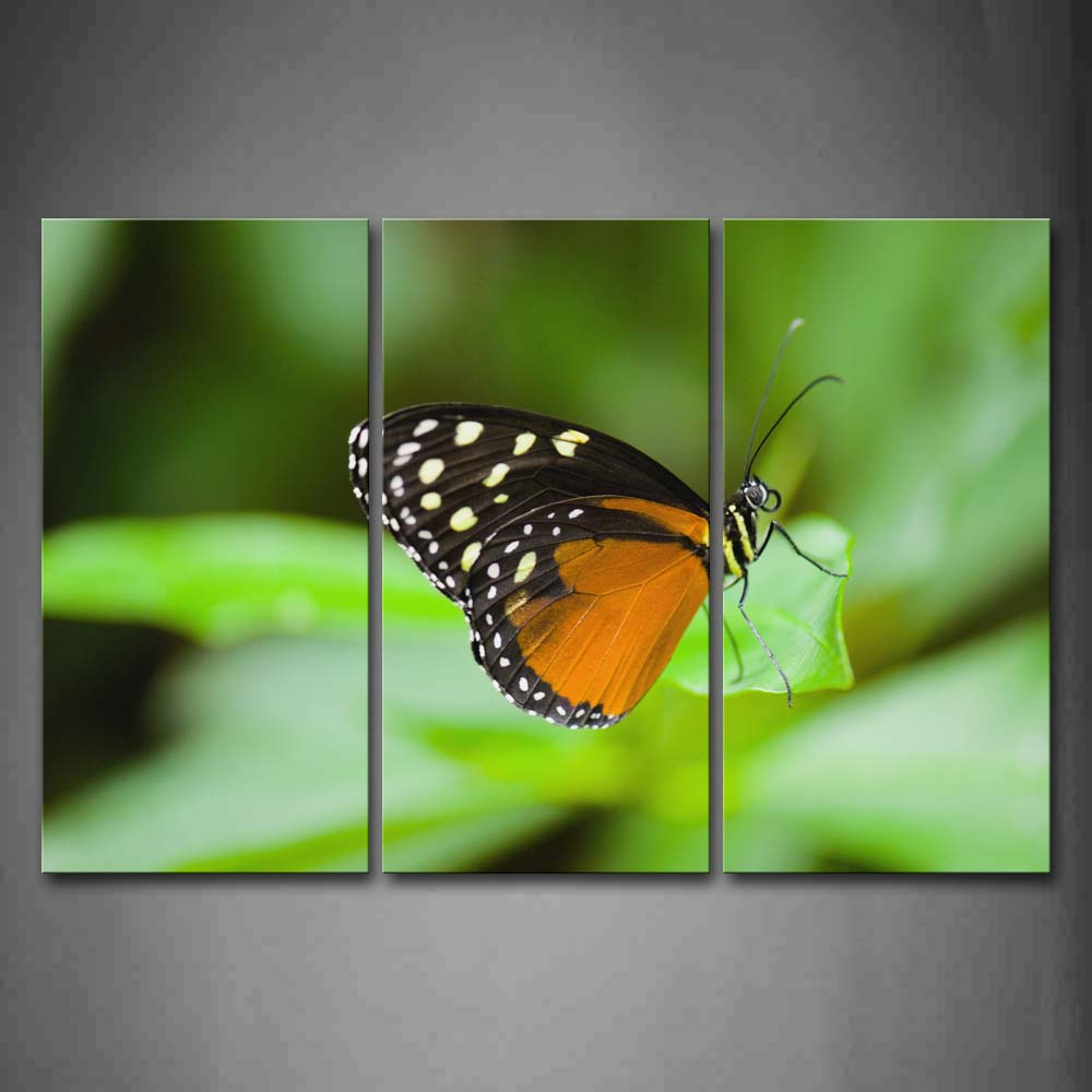 Black And Yellow Betterfly Stop On Leaf Wall Art Painting The Picture Print On Canvas Animal Pictures For Home Decor Decoration Gift