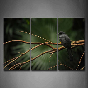 Black Bird Stop On Branch Wall Art Painting Pictures Print On Canvas Animal The Picture For Home Modern Decoration