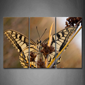 Black And Yellow Butterfly Stop On Brown Plant Wall Art Painting Pictures Print On Canvas Animal The Picture For Home Modern Decoration