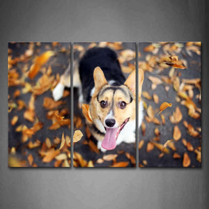 Black And Yellow Dog Look Up At Fallen Leafs Wall Art Painting Pictures Print On Canvas Animal The Picture For Home Modern Decoration