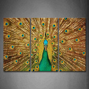 Beautiful Peacock Open Wings Wall Art Painting Pictures Print On Canvas Animal The Picture For Home Modern Decoration