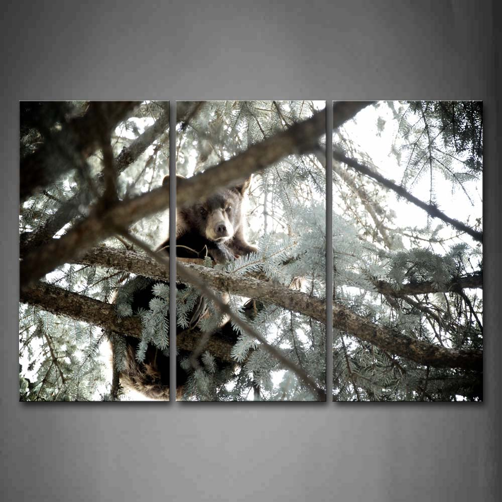 Bear Climb On Tree Look Down Wall Art Painting Pictures Print On Canvas Animal The Picture For Home Modern Decoration