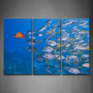 A Group Of Fishes Swim In Blue Sea Wall Art Painting The Picture Print On Canvas Animal Pictures For Home Decor Decoration Gift