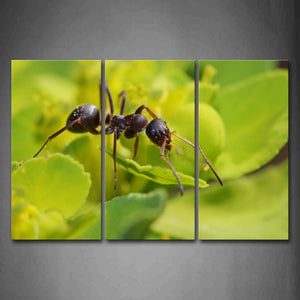 Ant Crawl On Leaf Wall Art Painting Pictures Print On Canvas Animal The Picture For Home Modern Decoration