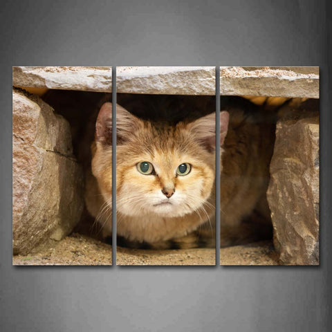 Sand Cat Lie Under Stones  Wall Art Painting Pictures Print On Canvas Animal The Picture For Home Modern Decoration