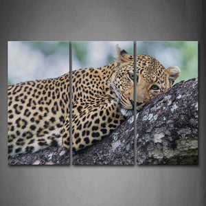 Leopard Lie On Rock Wall Art Painting Pictures Print On Canvas Animal The Picture For Home Modern Decoration
