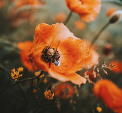 Making Poppies to Remember: Get crafty and pay your respects at home