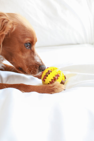 Dog Treat Ball - Yellow
