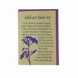 Elderberry, Birthday Card, Cone Head Flower, Blank Card, Recycled Paper, Compostable Plastic, Eco Friendly, Kraft Paper, Maine