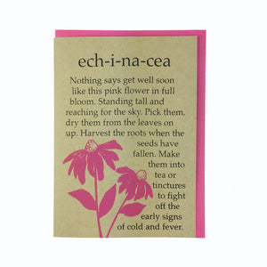 Echinacea, Get Well Card, Cone Head Flower, Spring Card,  Blank Card, Recycled Paper, Compostable Plastic, Eco Friendly, Kraft Paper, Maine