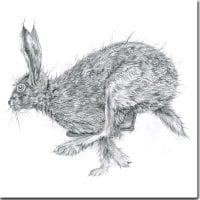 Sarah Broddy - Pencil Collection - Running Hare