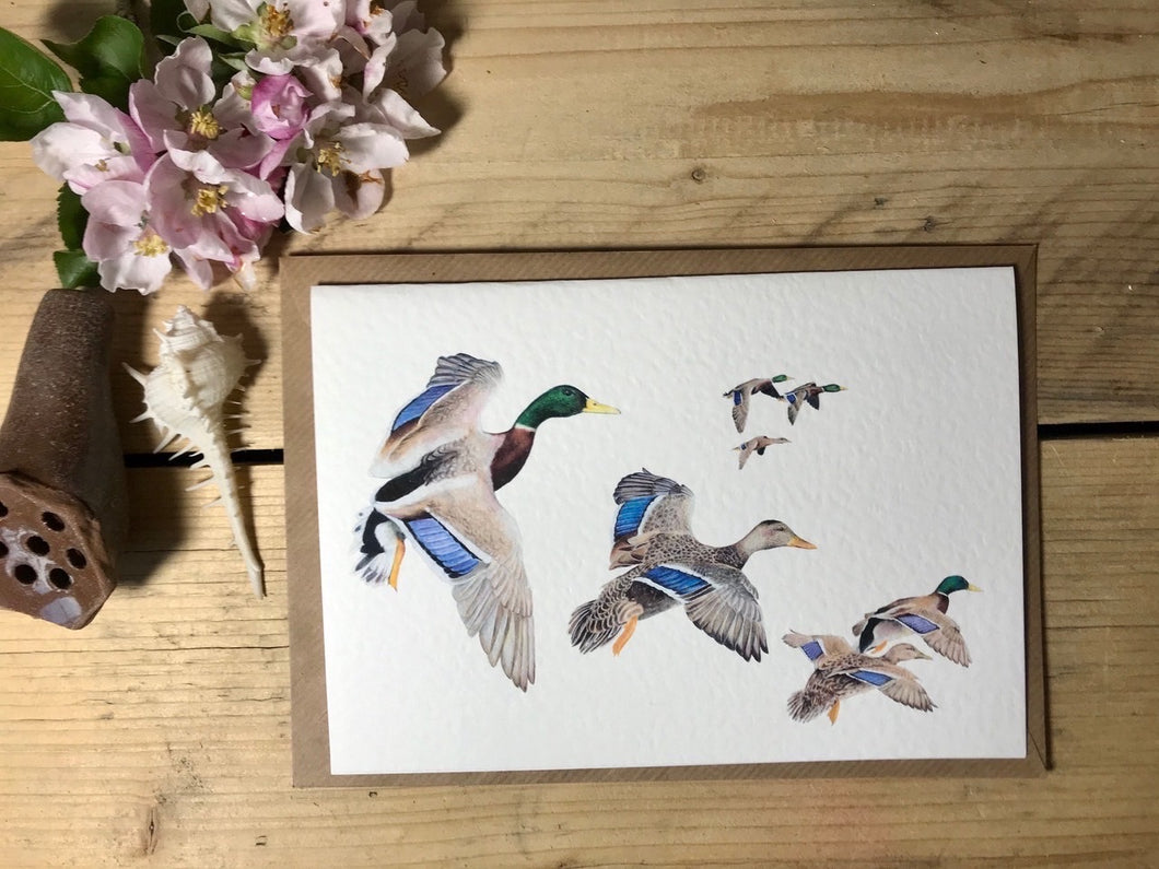 Charlotte Patten - A6 Mallard Ducks in Flight