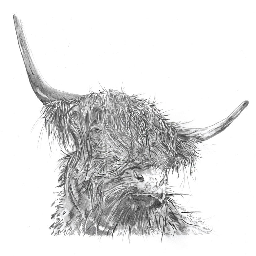 Pear Tree Heybridge - Sarah Broddy - Pencil Collection - Highland Cow