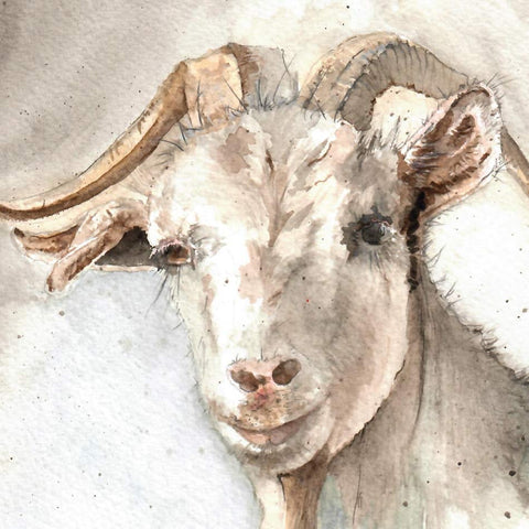 Goat Blank Greetings Card