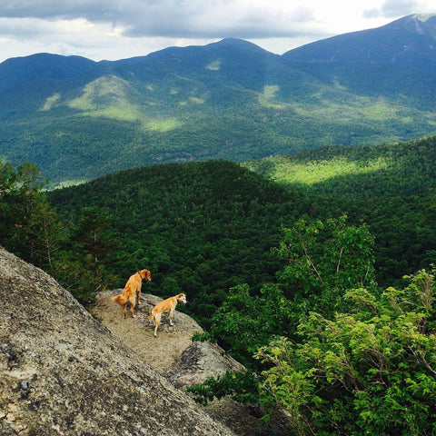 Two dogs peering over a cliff's edge near rolling green hills