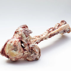 Big Truck Bone (vertebrae)