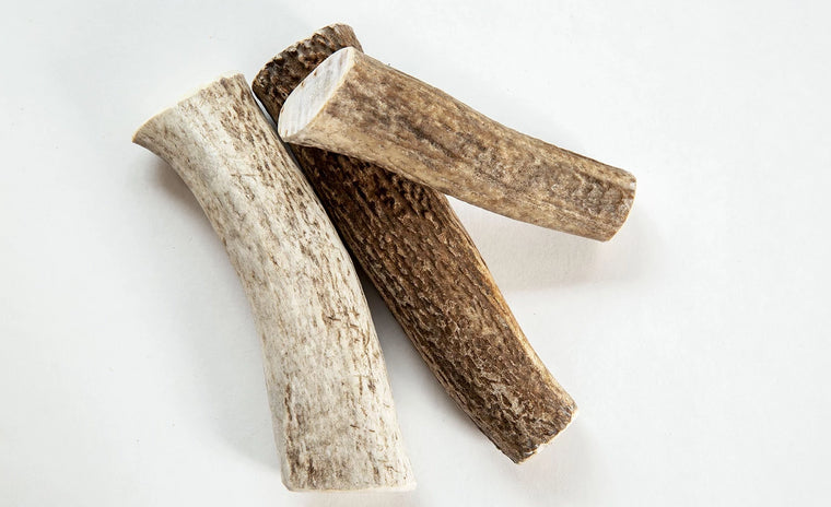 Whole Elk Antler (3 pieces)