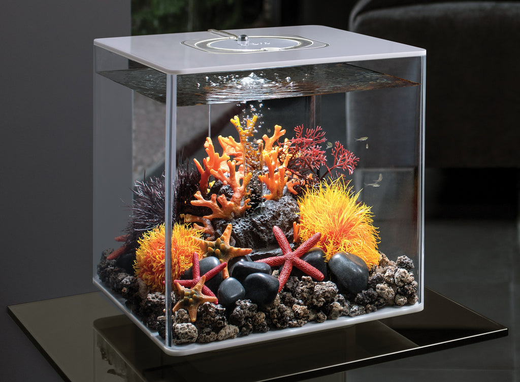 CUBE 30 Aquarium Inspiration