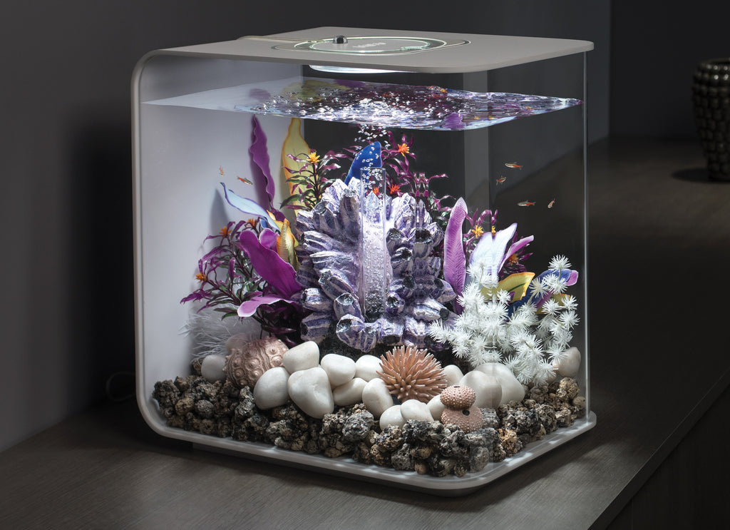 FLOW 30 Aquarium Inspiration