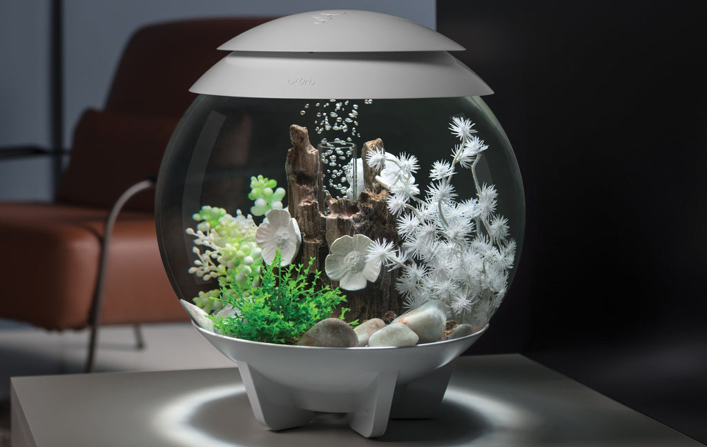 HALO 15 Aquarium Inspiration