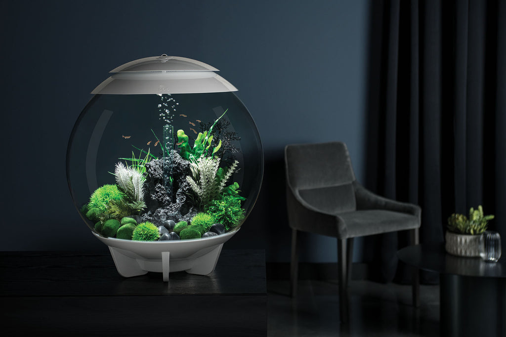 HALO 60 Aquarium Inspiration