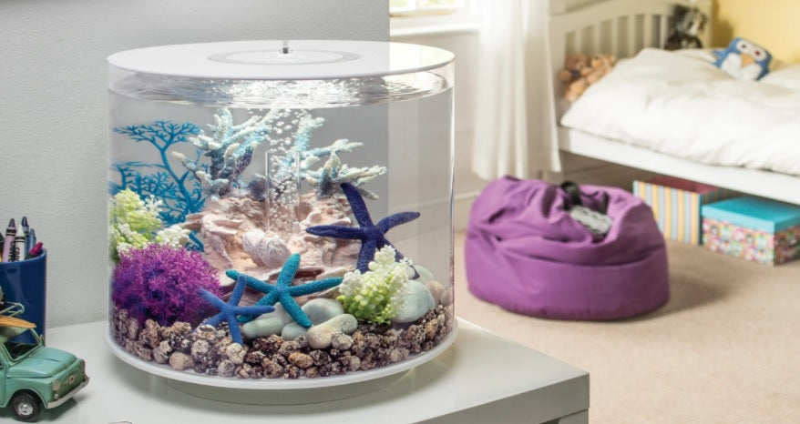 Small Aquariums