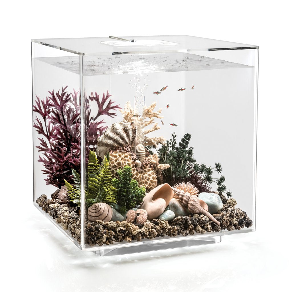 CUBE 60 Aquarium Inspiration 3