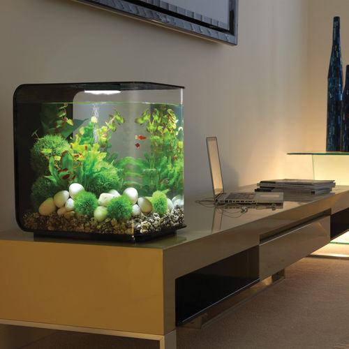 Get inspiration for your aquarium design by using the biOrb FLOW 30 Aquarium