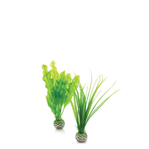 biOrb Easy Plant Set
