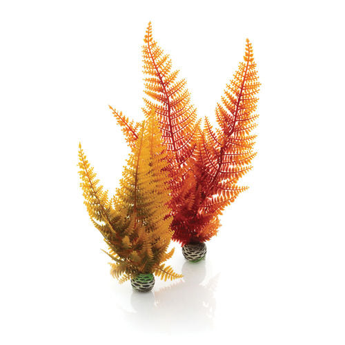 biOrb Autumn Fern Set 2