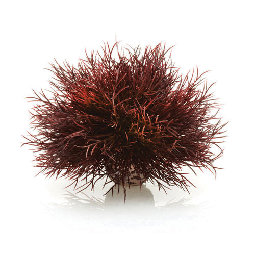 biOrb Sea Lily crimson