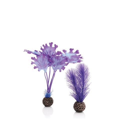 biOrb Kelp Set small purple