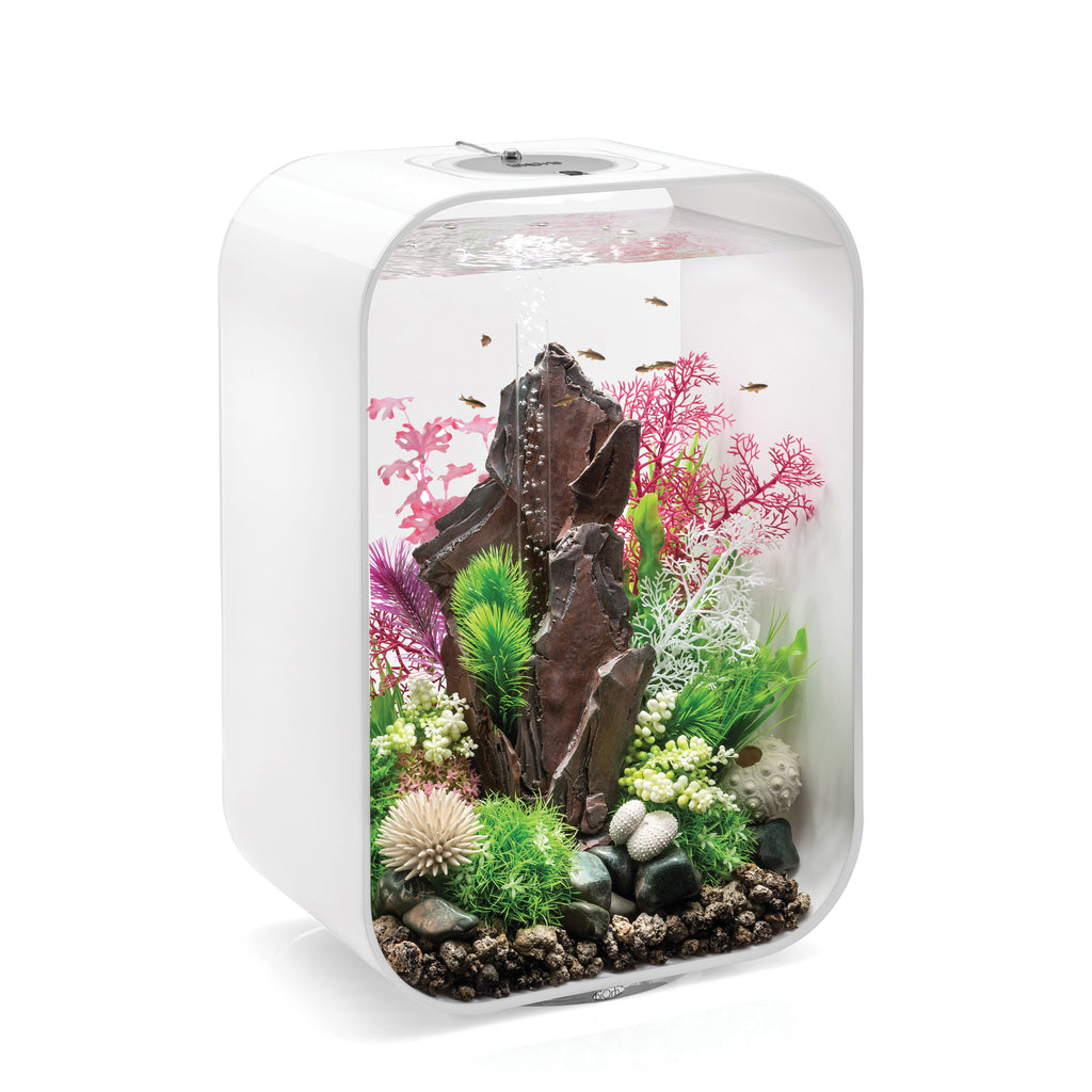 Get inspiration for your aquarium design by using the biOrb Kelp Set