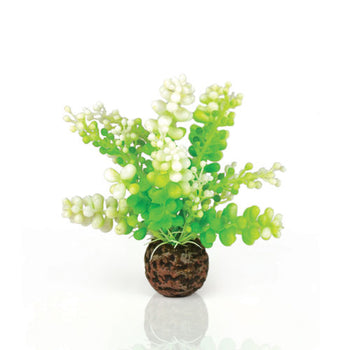 biOrb Caulerpa green