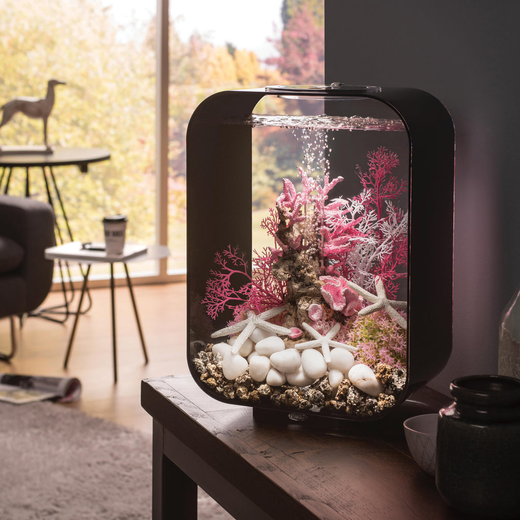 Get inspiration for your aquarium design by using the biOrb Aquarium Starfish Set of 3