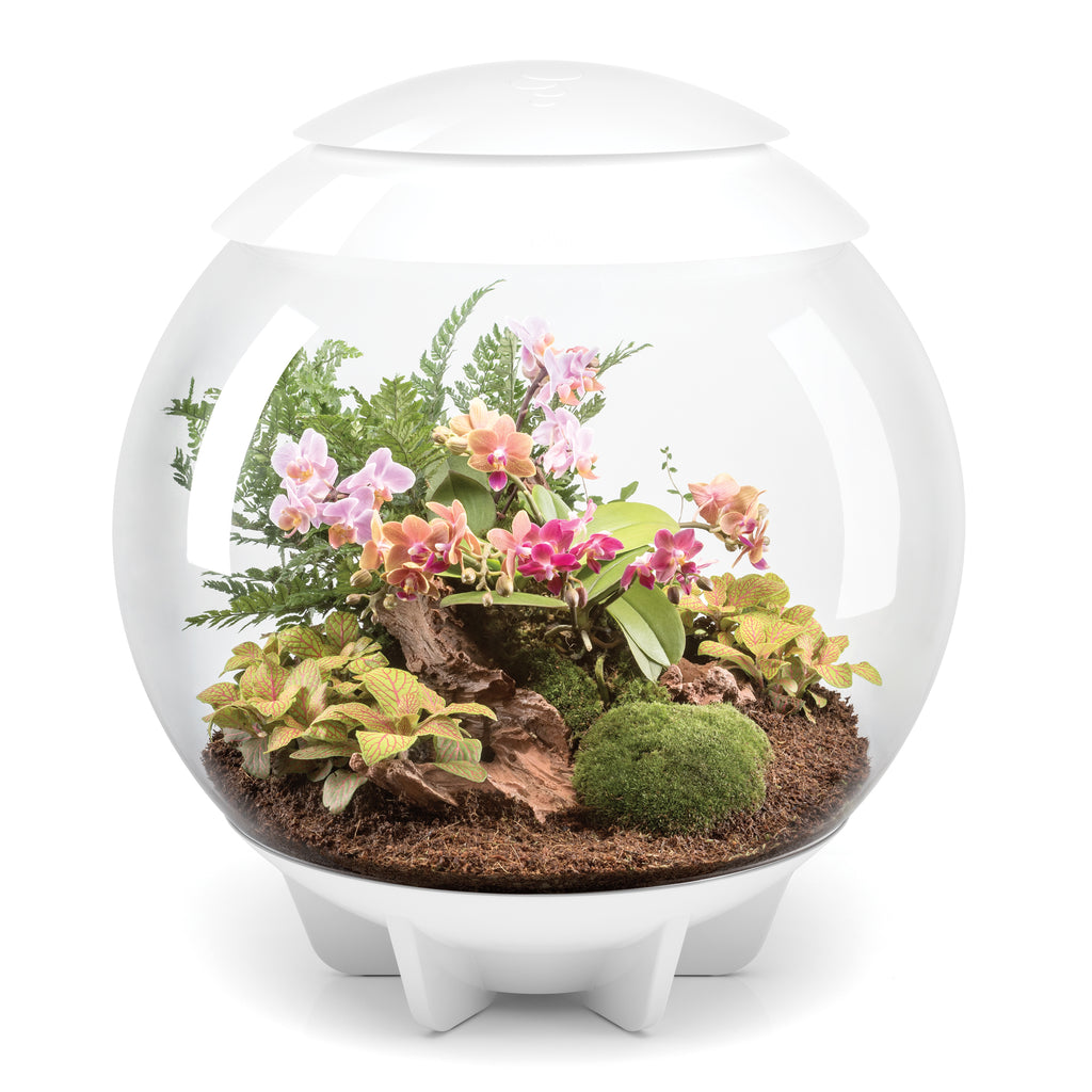 biOrb AIR LED Terrarium