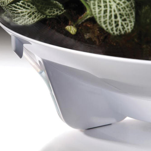 The biOrbAIR Terrarium is THE modern terrarium/vivarium, the biOrbAIR replicates the conditions found under the tropical forest canopy and will provide them with the humidity, air circulation and lighting they need.