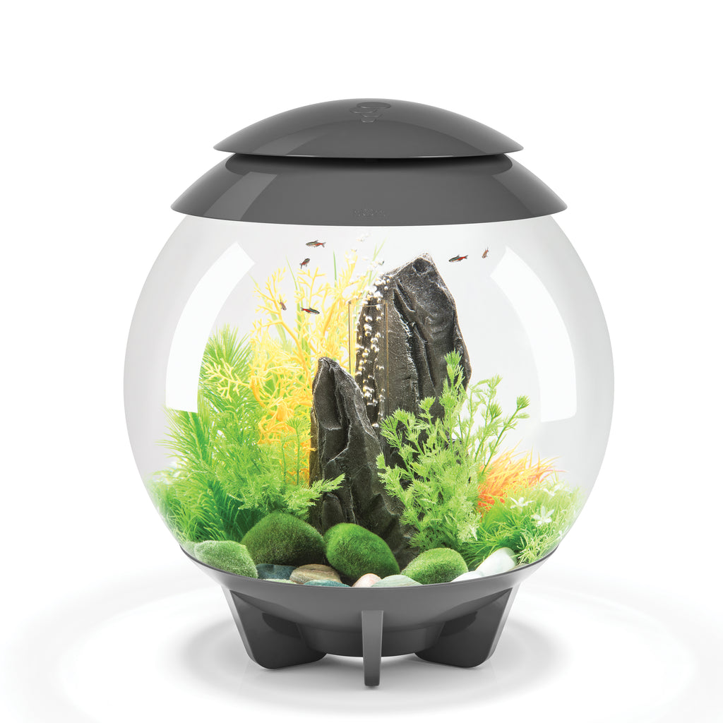 biOrb HALO 30 Aquarium with MCR available in grey