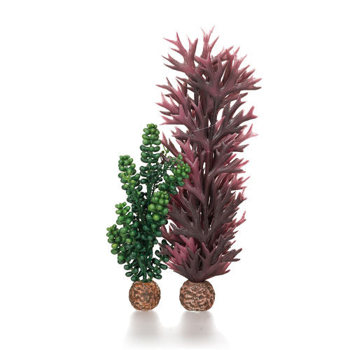 biOrb Seapearls & Kelp Aquarium Plants