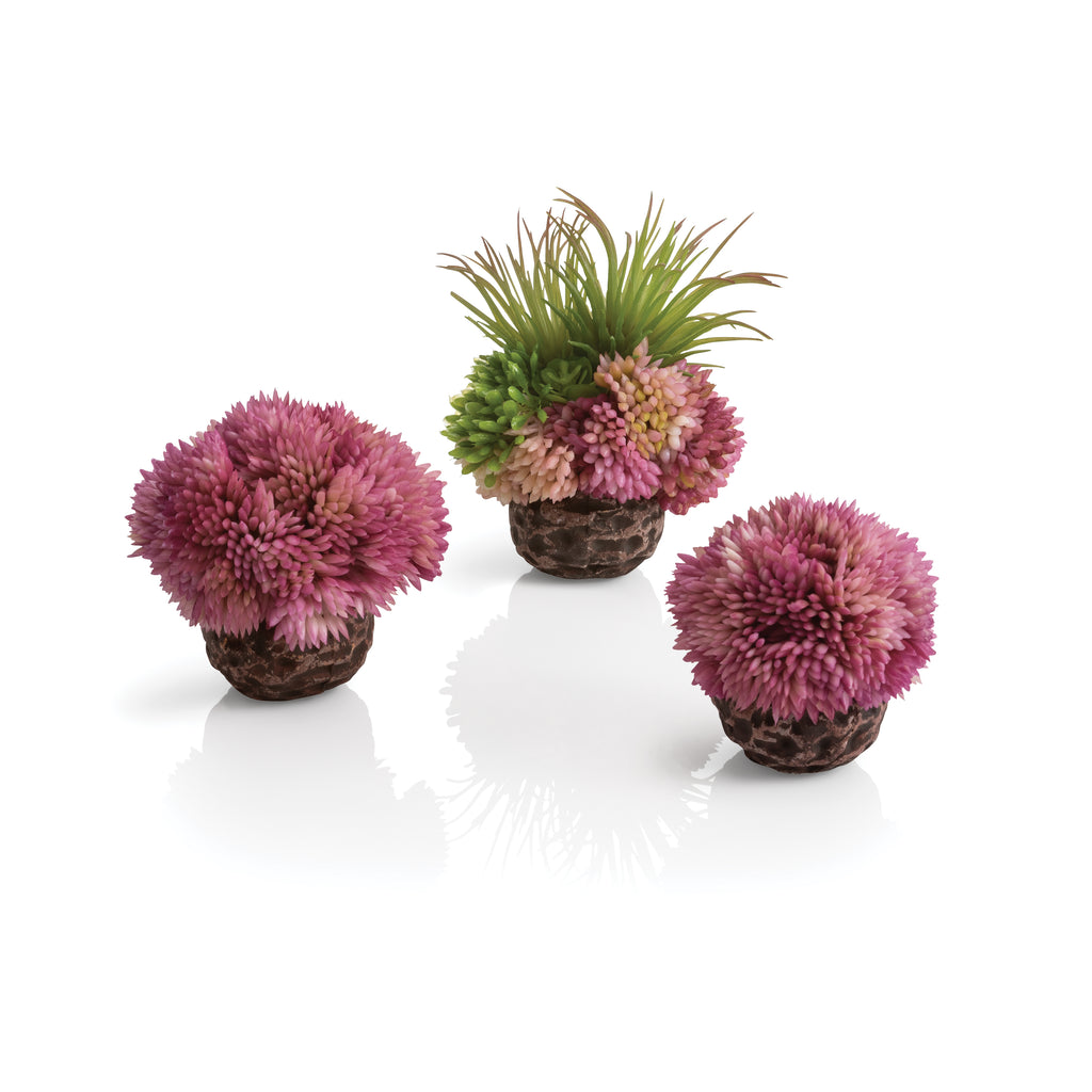 biOrb Seychelles Coral Ball Set of 3 purple