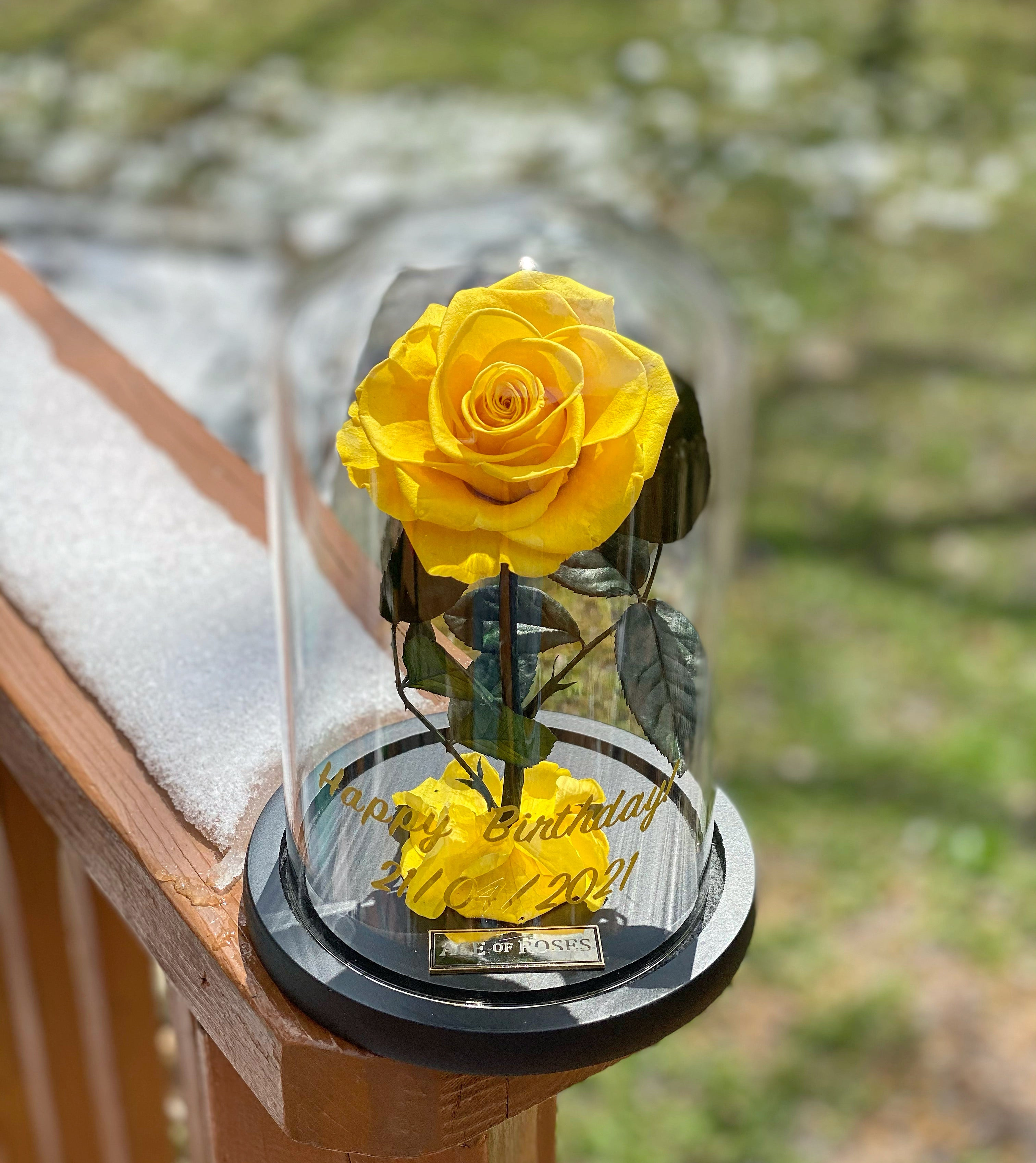 Glass Dome (Single Rose)