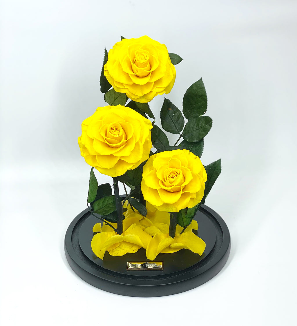 Glass Dome (3 Roses, Large)