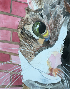 CAT CLOSEUP - PRINT