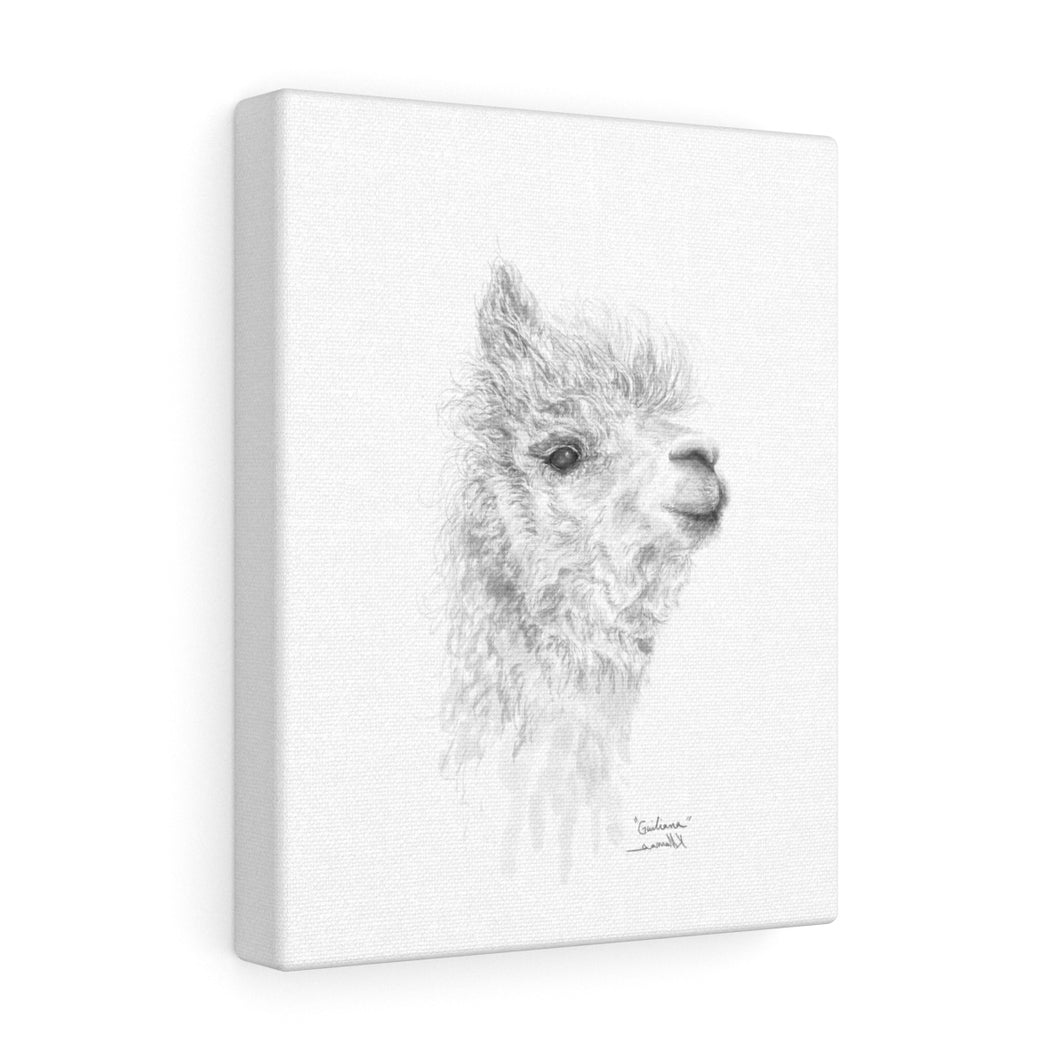 GIULIANA Llama - Art Canvas