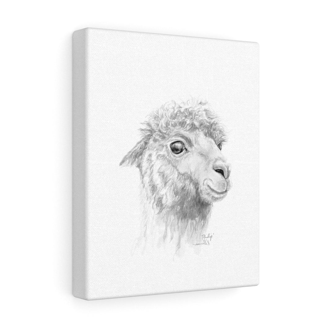 PHILLIP Llama - Art Canvas