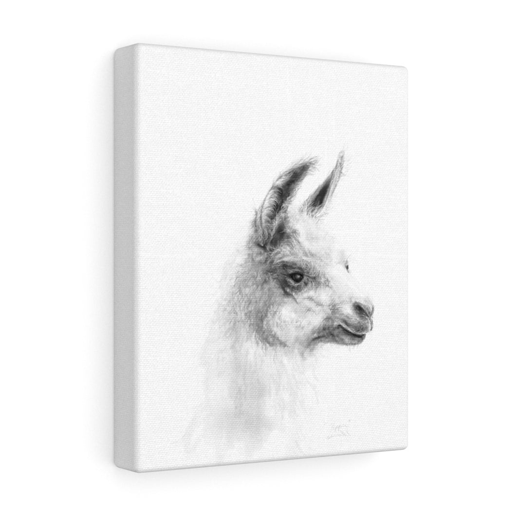 PEPPER Llama - Art Canvas