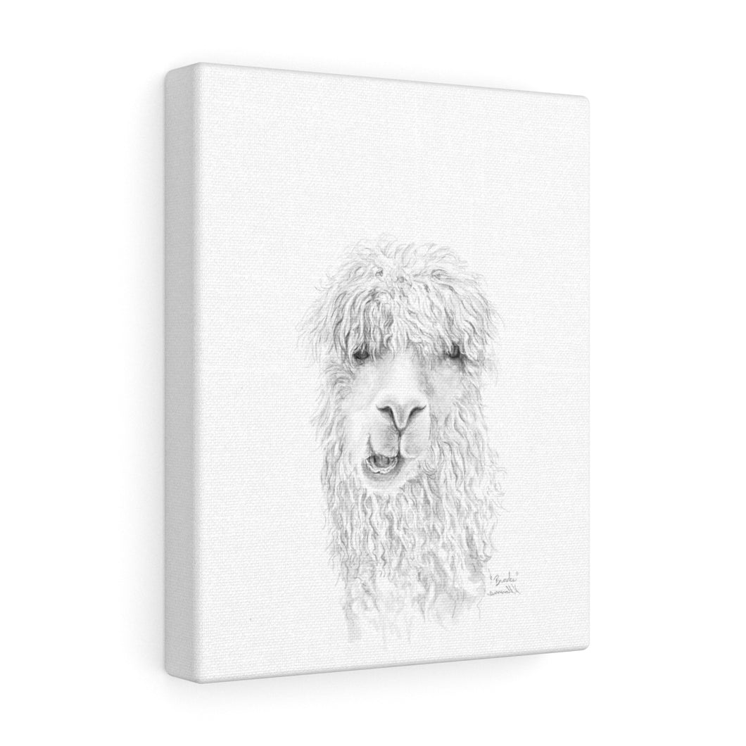 BROOKE Llama - Art Canvas